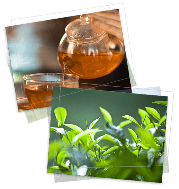 MJF Exports provide an efficient and reliable service to bulk tea importers around the world
